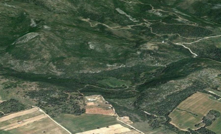 ΣτΕ: Συνταγματικοί οι αναθεωρημένοι δασικοί χάρτες - BusinessNews.gr